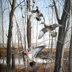 Пазл онлайн: Лесные утки