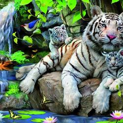 Пазл онлайн: Белые тигры