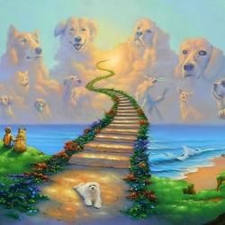 Пазл онлайн: Собачьи небеса