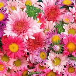 Пазл онлайн: Цветочный ковер