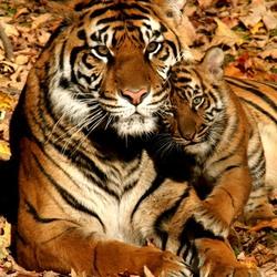Пазл онлайн: Любимая мама