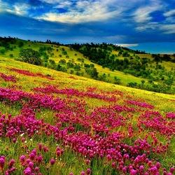 Пазл онлайн: Цветущие холмы
