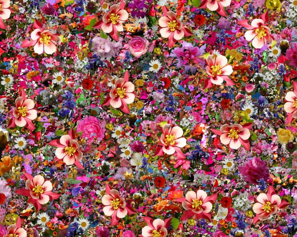 Фото цветов для коллажей
