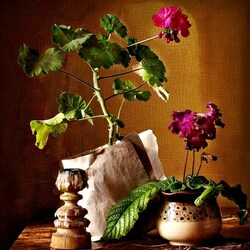 Пазл онлайн: Мои цветы