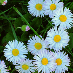 Пазл онлайн: Весенний хоровод