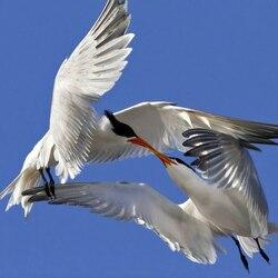 Пазл онлайн: На крыльях любви
