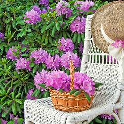 Пазл онлайн: В цветущем саду