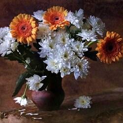 Пазл онлайн: Хризантемы и герберы