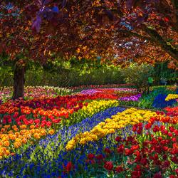 Пазл онлайн: Цветочный парк