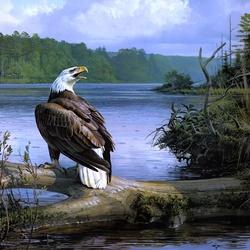 Пазл онлайн: Белоголовый орлан