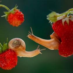 Пазл онлайн: Любительницы ягод