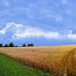 Пазл онлайн: Дорога через поле