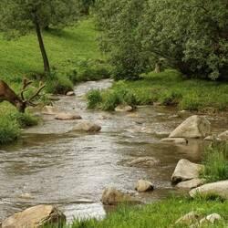 Пазл онлайн: На водопое