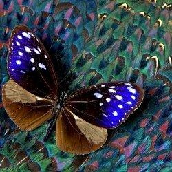 Пазл онлайн: Бабочка на перьях