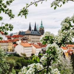 Пазл онлайн: Прага весной