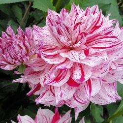 Пазл онлайн: Пестро-розовый