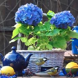 Пазл онлайн: Оттенки синего