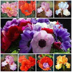 Пазл онлайн: Цветы от Marianne Broome