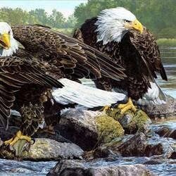 Пазл онлайн: Белоголовые орланы