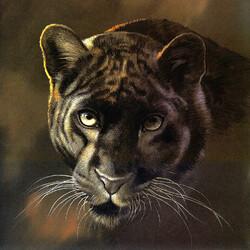Пазл онлайн: Взгляд пантеры