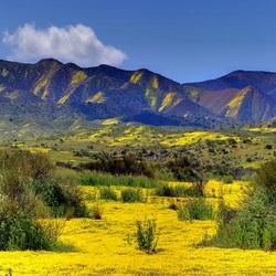 Пазл онлайн: Желтая долина