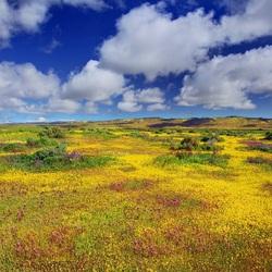 Пазл онлайн: Цветы и небо