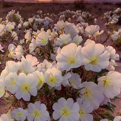 Пазл онлайн: Цветы и закат