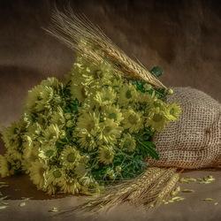 Пазл онлайн: Хризантемы и колоски