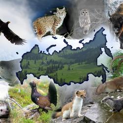 Пазл онлайн: Животные России