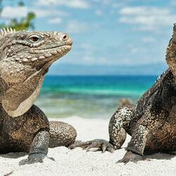 Пазл онлайн: Потомки динозавров