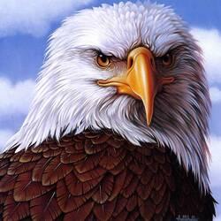 Пазл онлайн: Белоголовый орел