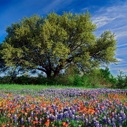 Пазл онлайн: Яркие краски природы