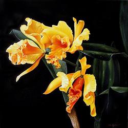 Пазл онлайн: Орхидеи