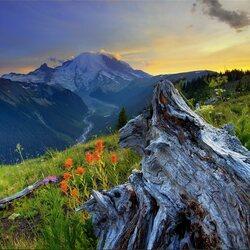 Пазл онлайн: На склоне горы