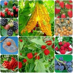Пазл онлайн: Всякие ягоды