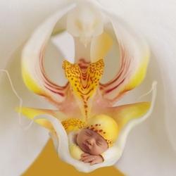 Пазл онлайн: Малыш-орхидея