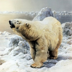 Пазл онлайн: Белый бедведь
