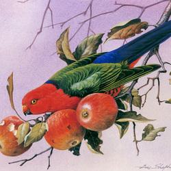 Пазл онлайн: Попугай и яблоки