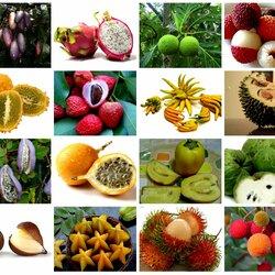 Пазл онлайн: Экзотические фрукты