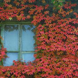 Пазл онлайн: Осеннее окно