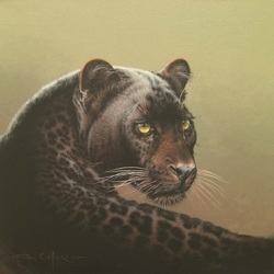 Пазл онлайн: Черный леопард