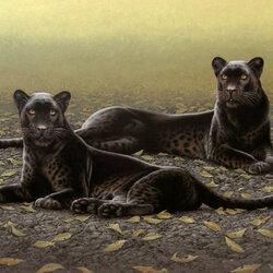 Пазл онлайн: Две пантеры