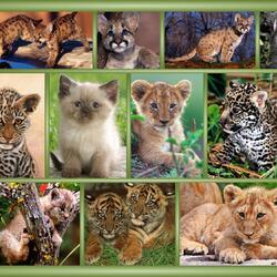 Пазл онлайн: Большие кошки