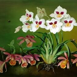 Пазл онлайн: Орхидеи в саду