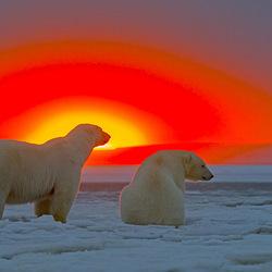 Пазл онлайн: Арктический закат