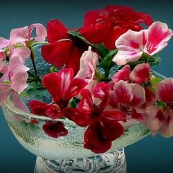 Пазл онлайн: Цветки герани