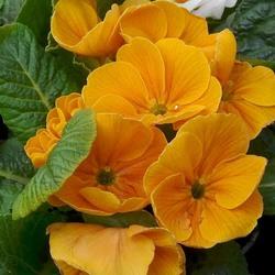Пазл онлайн: Цветы с выставки