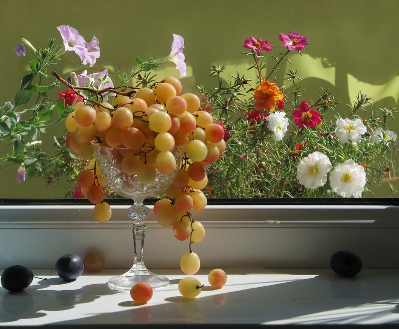 Днем рождения, открытки с виноградом доброе утро