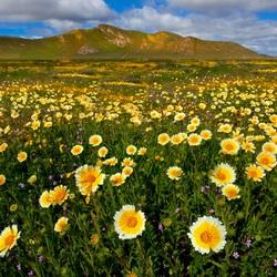 Пазл онлайн: Цветы на лугу