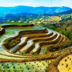 Пазл онлайн: Рисовые поля